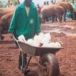 Milk Bottles for the Elephants May 2015