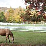 Horse from The Berkshire Equestrian Center