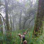 Pfad hinab nach Zinacatan durch Zwerg-Bambus