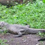 Foto de Parque Ecologico Chapultepec