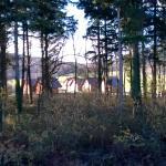 weekend de détente au milieu de la forêt