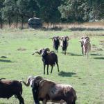 Von Netzer Ranch