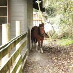 Bild från Pebble Cove Farm