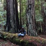 Meditating in the redwoods