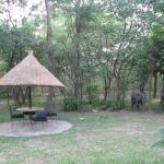 Elephants in the park ?