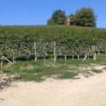 Agriturismo Bianconiglio