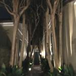 Tree lined entrance at night