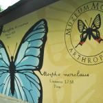Arthropoda - Butterfly Museum