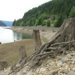 these were large trees that had been submerged and were not rotting