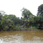 Tortuguero National Park-boring and nothing to see