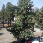 Shilo Inn Suites Mammoth Lakes Foto