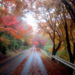 信貴生駒スカイライン 秋の雨上がり紅葉