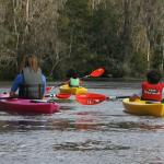 Silver River Kayaking with BK Adventure