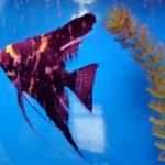 fish in their aquarium