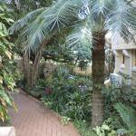 The garden pathway