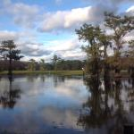 Beautiful bayou!