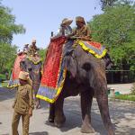 Elephant Ride (161635273)