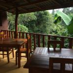 Tea Forest Lodge Guesthouse Photo