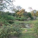 Xishuangbanna Tropical Nature reserve Foto