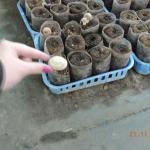 Bilde fra Mushroom Garden