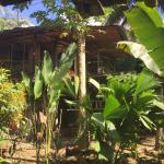 Photo of El Jardin Tortuga
