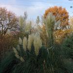 Autumn nature at the yard