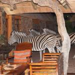 Zebras am Küchenfenster