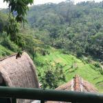 Landscape - Kupu Kupu Barong Villas and Tree Spa Photo