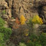 Fall Colors in Modesta Canyon