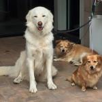 Our 3 dogs, Bob, Mimi & Chester, were all very comfortable at Rosanna Camilli's!
