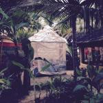 Monsoon Foto