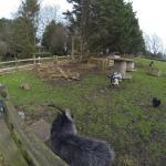 Antonia House garden and paddock