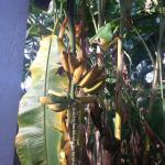 Bois des Chenes Foto