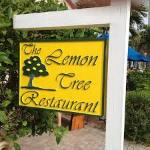 Lemon Tree Vero Beach