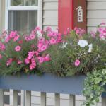 Flower boxes outside