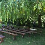 Wedding event setup under the willow
