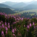 Im südlichen Teil des Altai zwischen Uryl und Markakol