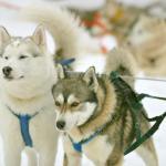 Lapland Safaris - Day Tours