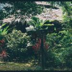 Photo de Jungle Way Restaurant & Bungalows