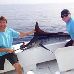 Striper Marlin