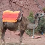 Camel Ride High Atlas