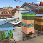 Nos ruches / our hives