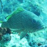 Foto de Golden Rock Dive Center