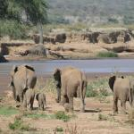 Siri Ya Kenya - Day Tours