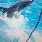 Apex Shark Expeditions Foto
