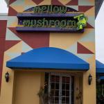 Mellow Tampa