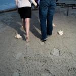 February Proposal
