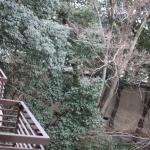 Photo de Hyatt Regency Kyoto