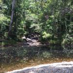 D'Arcy of Daintree 4WD Tours Foto