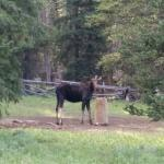 Photo of Bear Lodge Resort